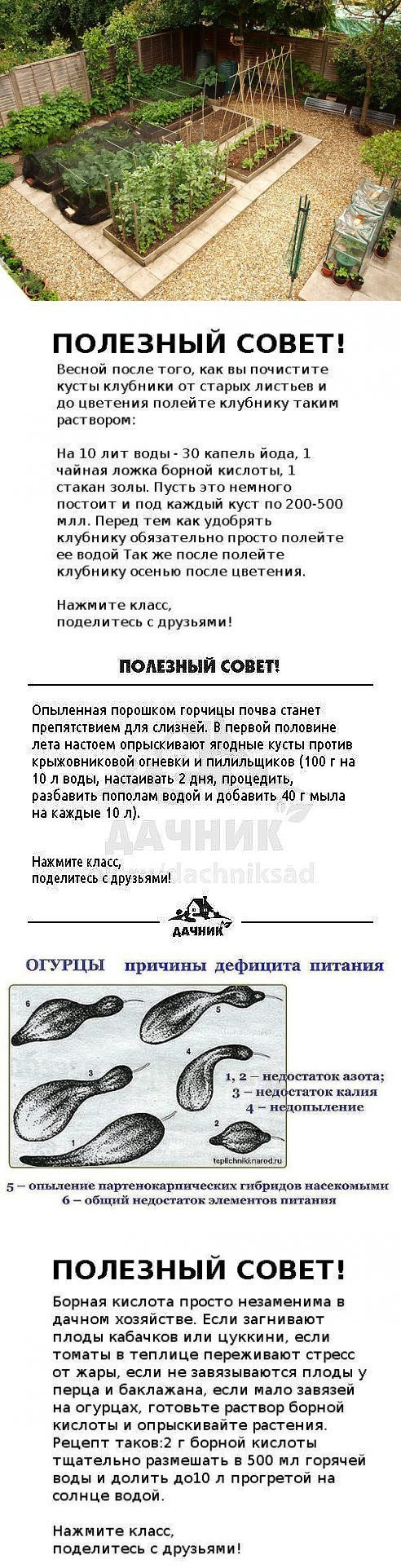 (12) Одноклассники:
