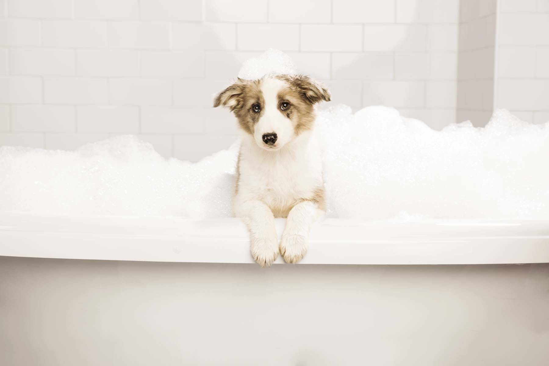 Puppy Tip Ensure Smooth Skin And A Shiny Coat By Washing Dogs No