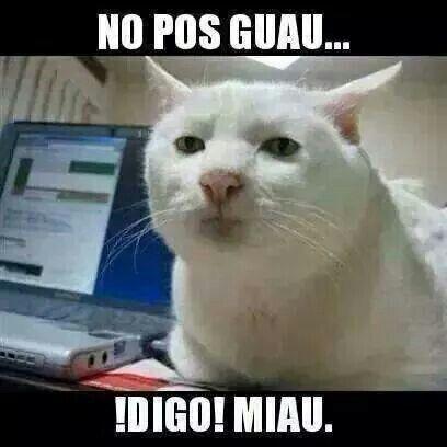 Pues Miau Meme Gato Chistes De Perros Gatos