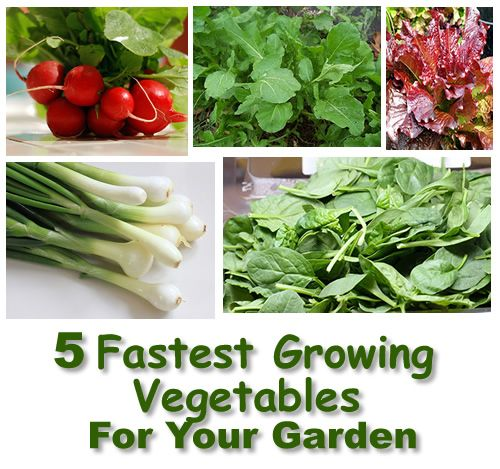 Cheap Plants That Grow Fast: 5 Fast Growing Vegetables For Your Garden #gardening