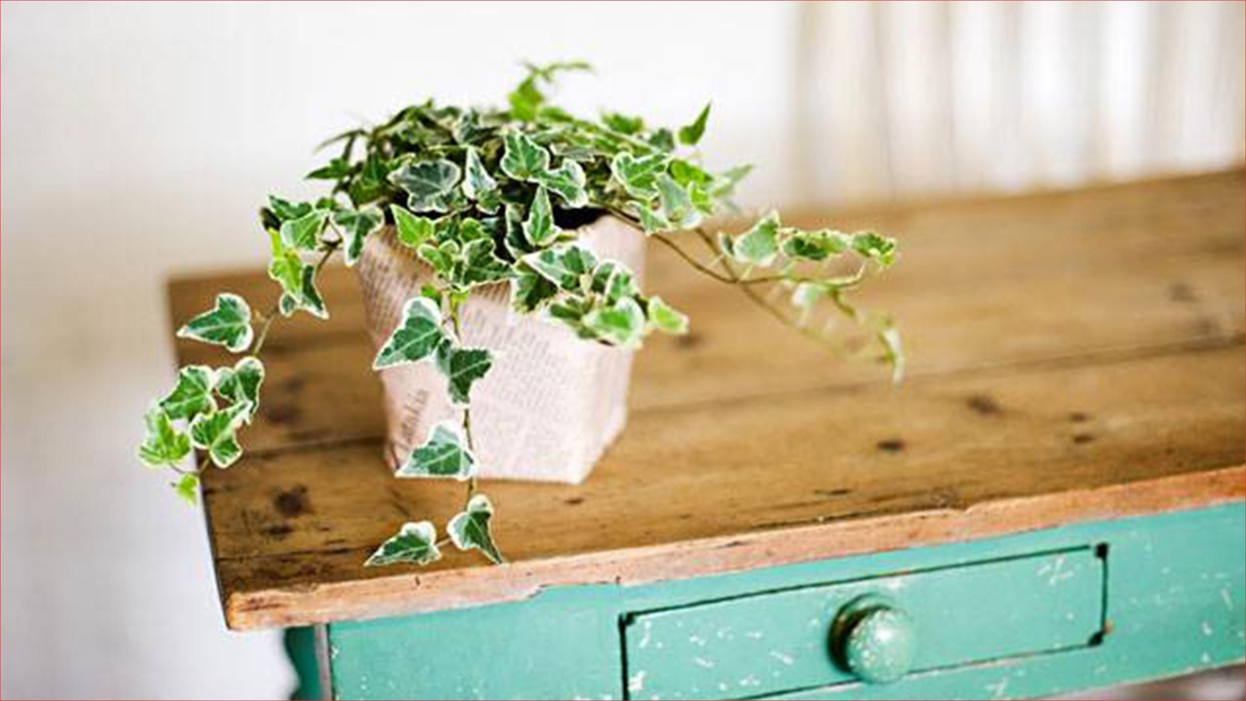 easy houseplants