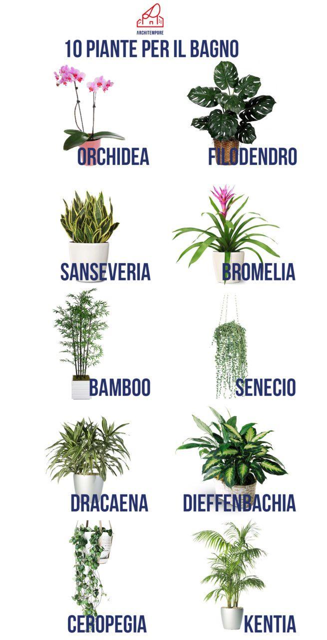 Jungle bath guida alle piante in bagno cuore verde - Piante per il bagno ...
