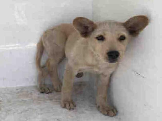 NO LONGER LISTED A1646407 URGENT CITY OF LOS ANGELES
