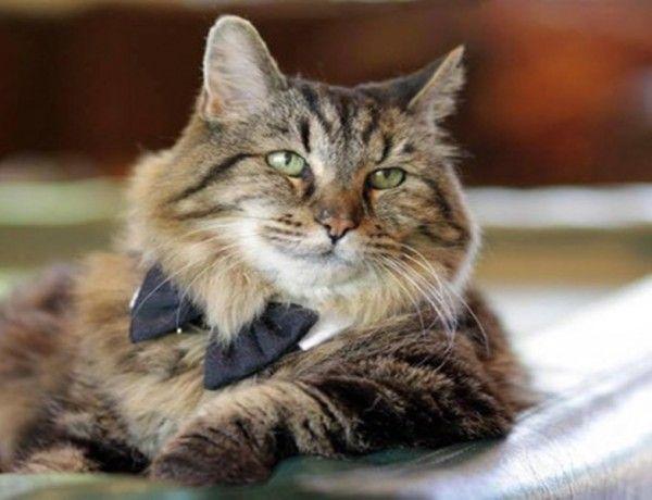 İnsan yaşıyla 121 yaşında: Dünyanın en yaşlı kedisi Guinness'e girdi Detaylar ajanimo.com'da. #ajanimo #ajanbrian #cat #kedi #catslover #catstagram #cats #animal #animals #hayvan #petstagram #petslover #pets #pet #animallovers #catlover #ilovemycat #oldcat #old #guinness