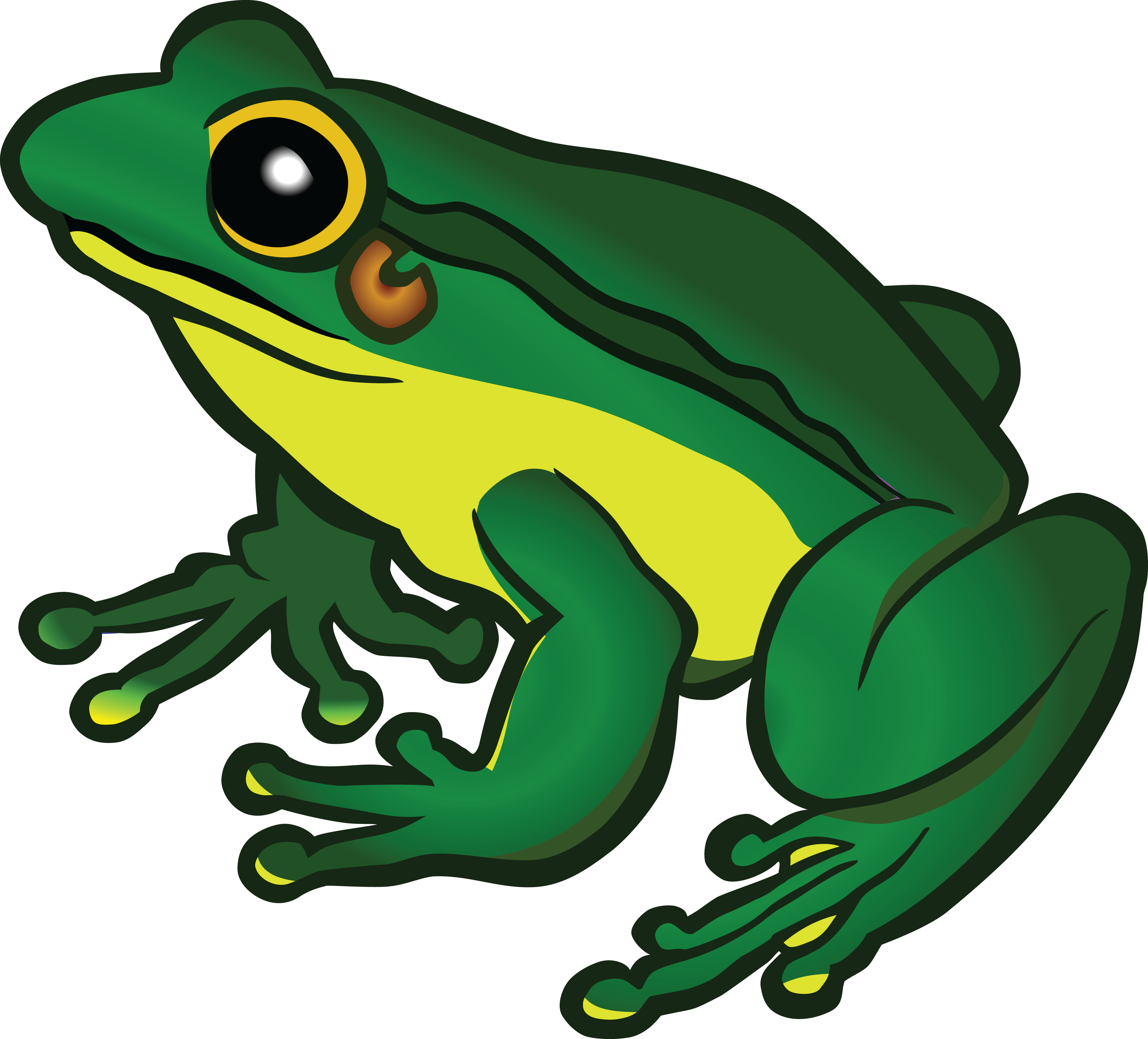 Free Clipart Of A frog   FROG CLIPART   Pinterest   Ranas