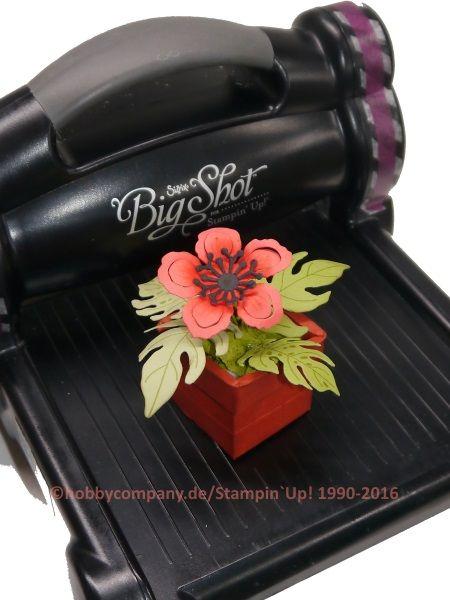 Big Shot und Produkte von Stampin Up