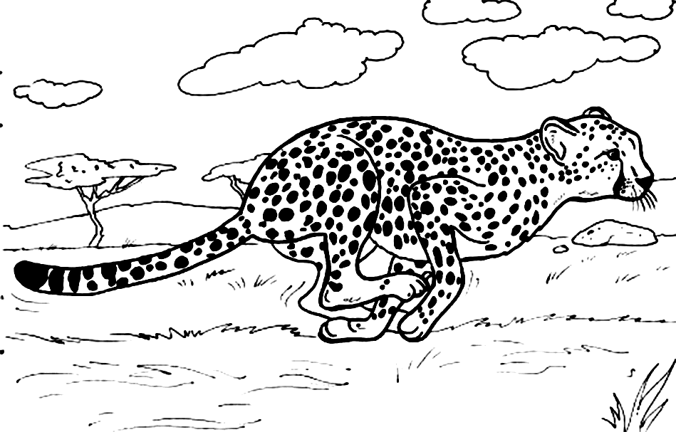 Cheetah Girl Coloring Pages Animal Coloring Pages Zoo Animal Coloring Pages Coloring Pages