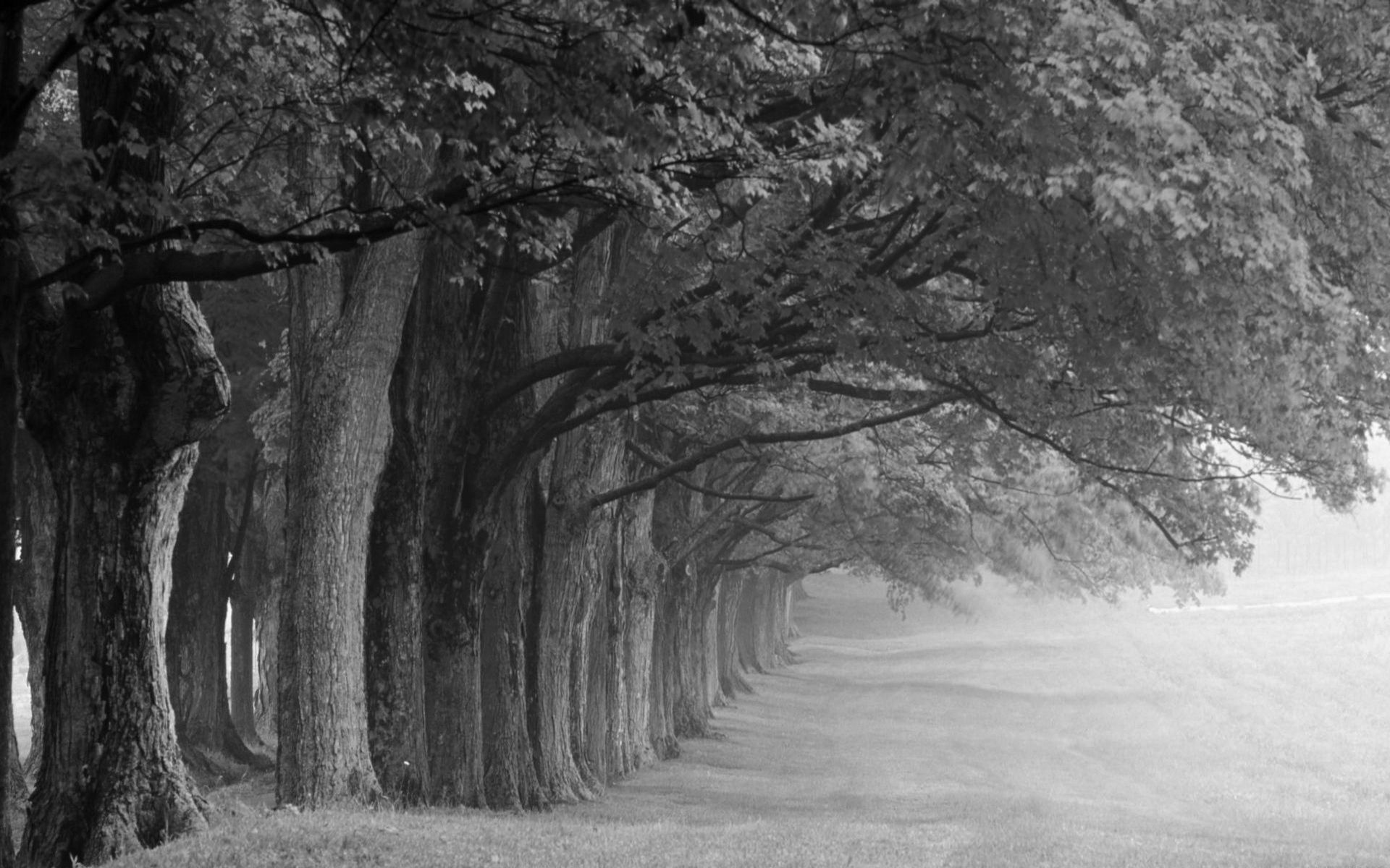 black and white tree photography | file name : black and white