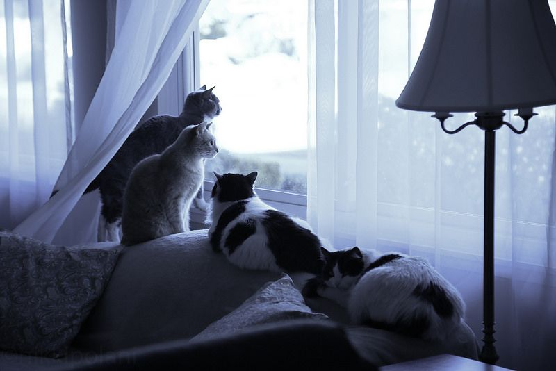 four cats in widow by nikkipolani