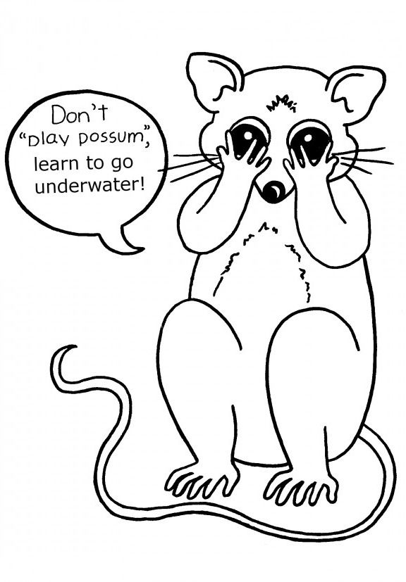 possum coloring pages for kids - photo#3