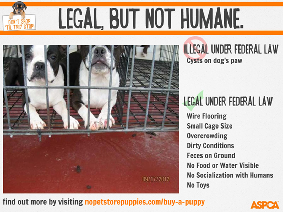 Puppy Mills , the Religion of Cruelty for Profit