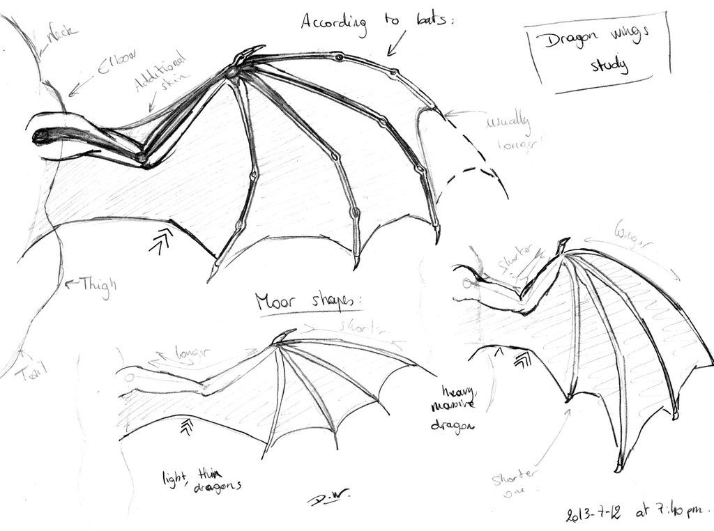 Dragon Wings Study By Dark Wolf 59 D6d5nf6 Jpg 1 024 762 Pixels Wolf Ears Anime Drawings Wolf Ears And Tail