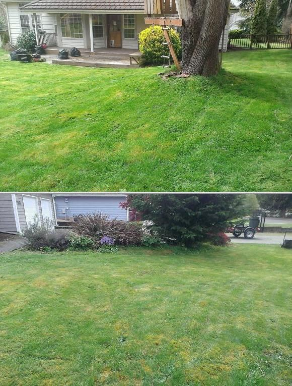 Cedarwealth Lawn Care Has Some Of The Best Rated Carpet Cleaners Who Also Handle Painting Pressure Washing An House Painting Lawn Maintenance Cleaning Gutters