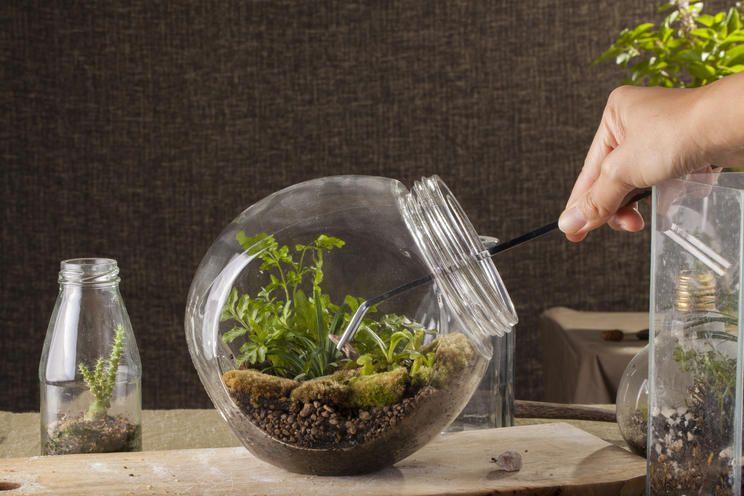 Flaschengarten Kleines Okosystem Im Glas Flaschengarten Pflanzen Terrarienpflanzen