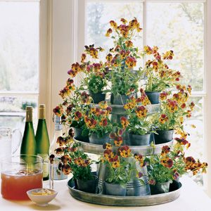 Make a tiered display by employing galvanized buckets and trays—they are inexpensive, readily available, and make a big impact.