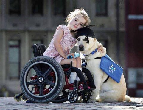Best Friends Therapy Dogs Service Dogs Assistance Dog