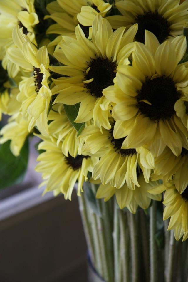 flower-Sunflower