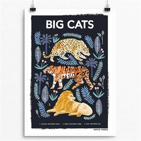 Big Cats Natural History Print, Choose Size