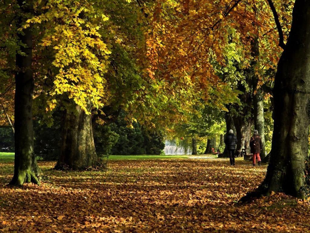 Herbst Hintergrundbilder Http Wallpapic De Natur Herbst