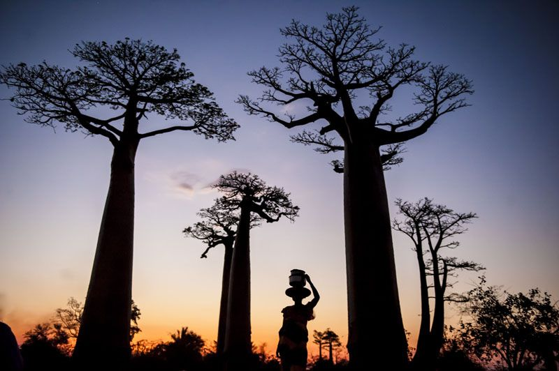 Viaje fotográfico a Madagascar 2013