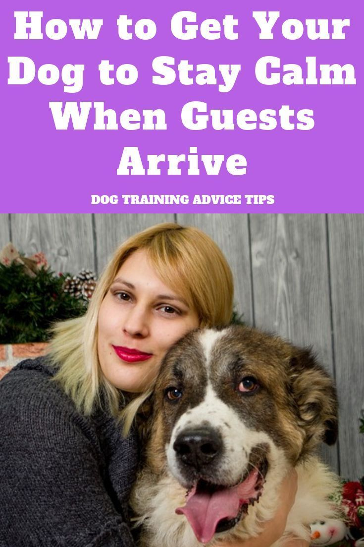 How To Get Your Dog To Stay Calm When Guests Arrive Dog Training