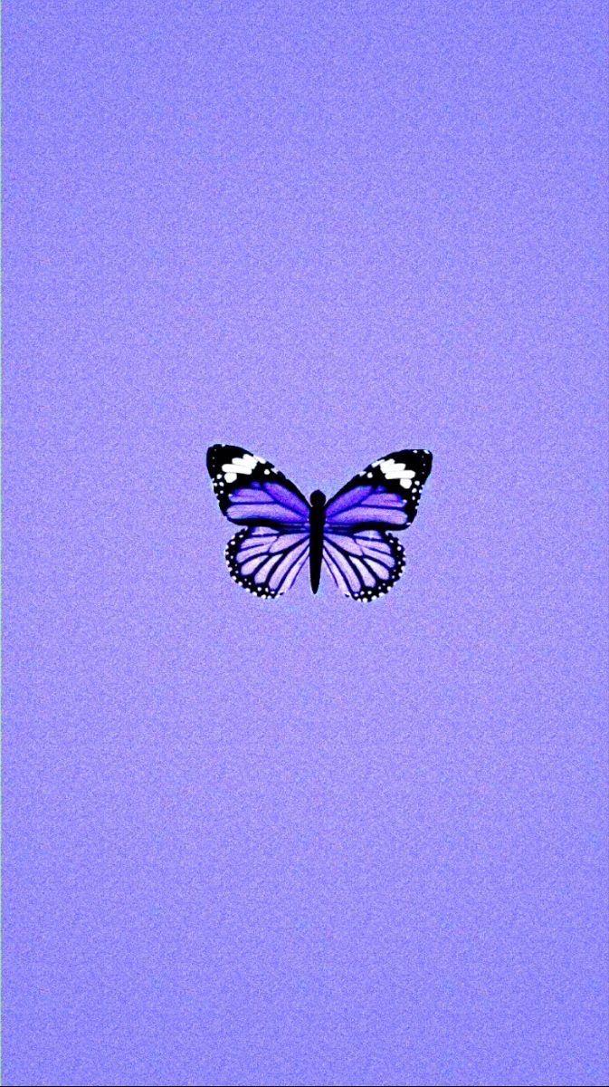 Pin By Julieanna David On Cute Wallpaper Backgrounds Butterfly Wallpaper Iphone Purple Aesthetic Purple Butterfly Wallpaper