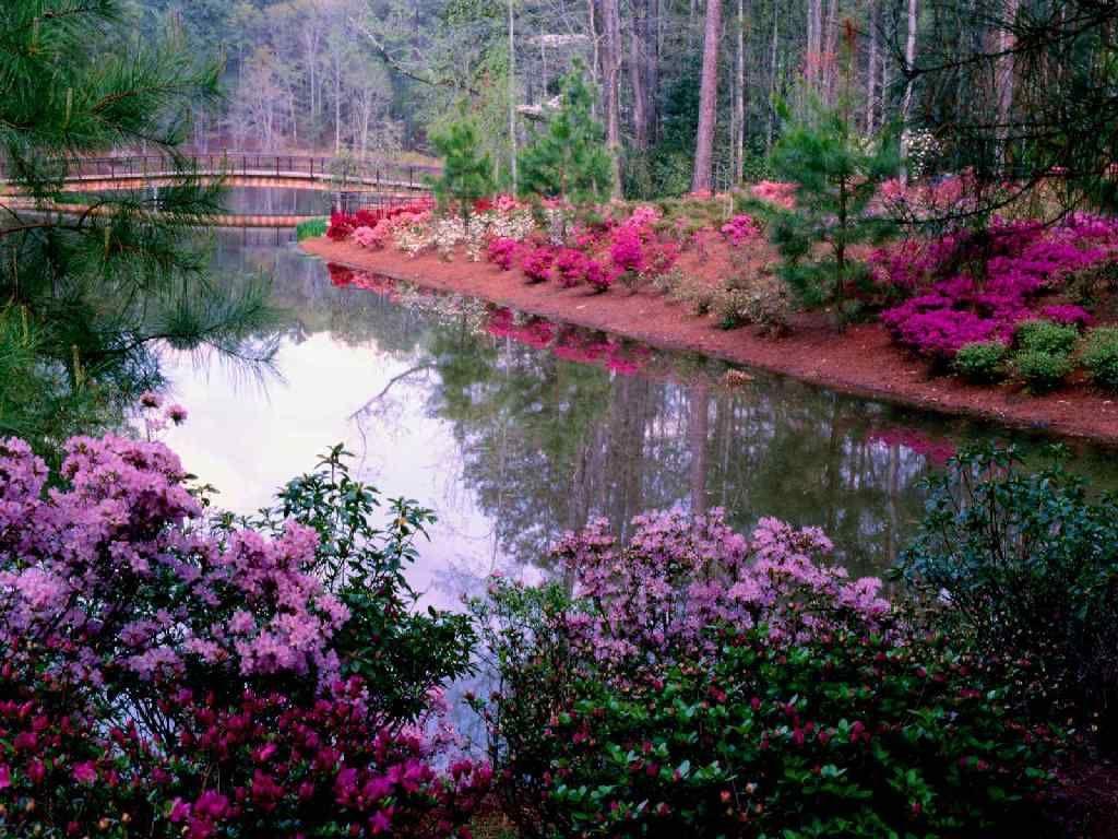 fond d'ecran gratuit jardin fleuri
