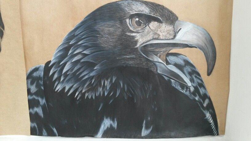 Charcoal Drawing- Eagle