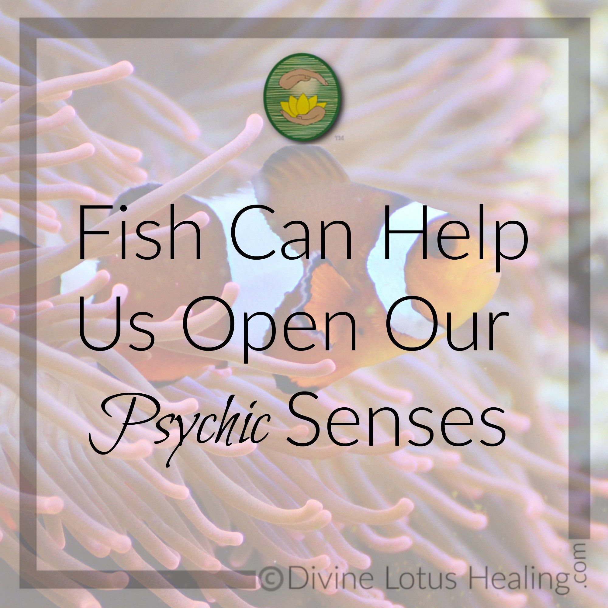Fish Can Help Us Open Our Psychic Senses    As part of the psychic & spiritual development class I teach, one key lesson participants in the class continuously work on is trusting the messages that come through to