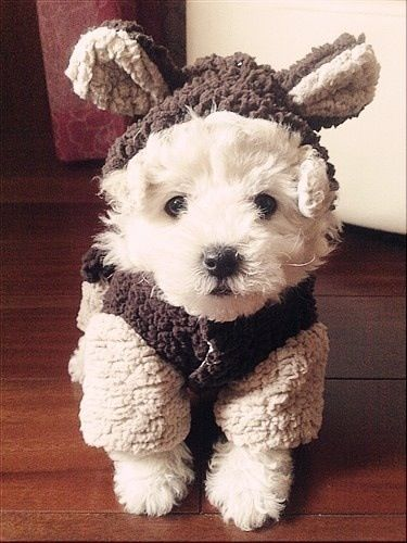 cuteness for sure gonna dress my lexie girl like this