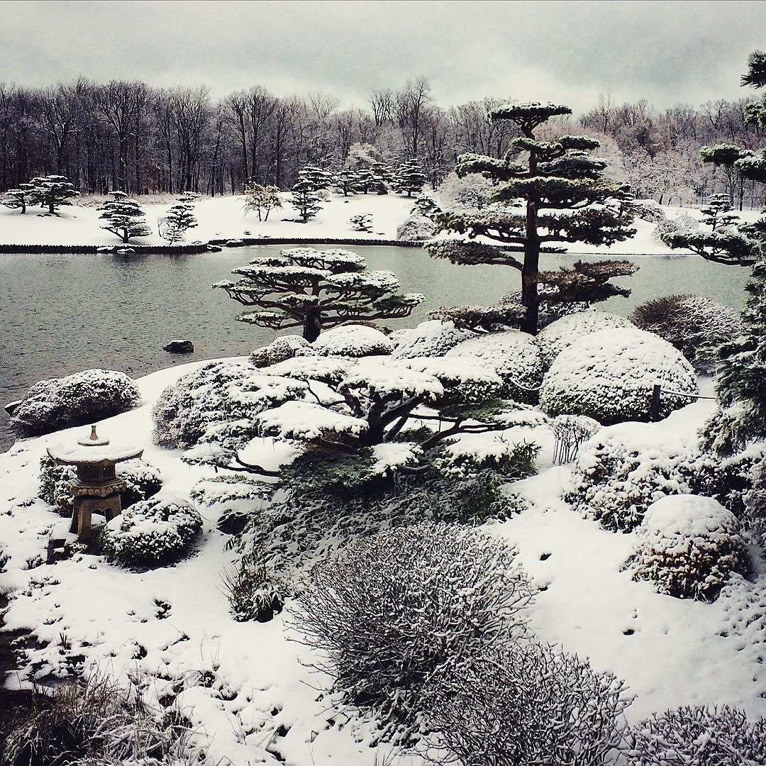 the japanese garden pruned to catch the snow to look like floating