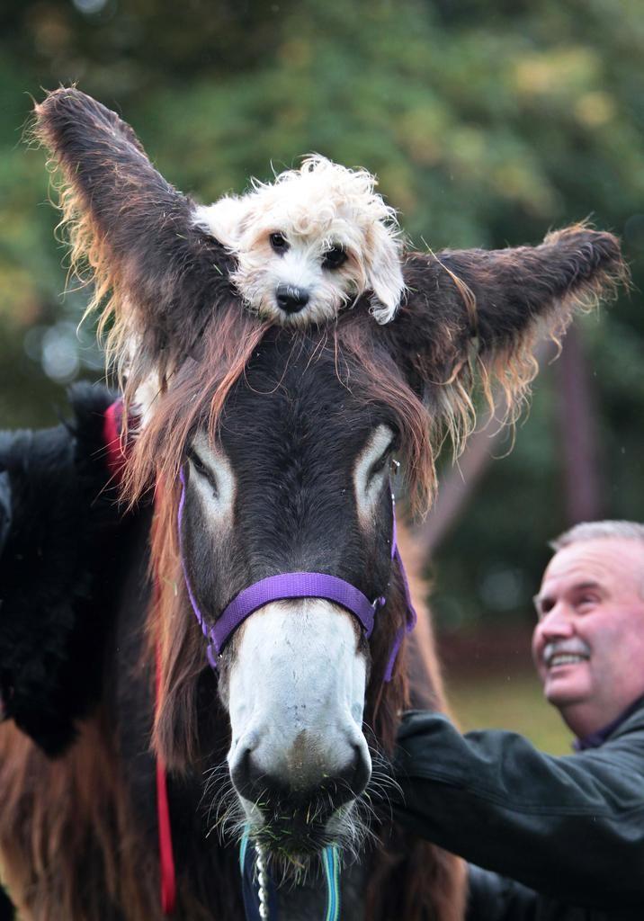 Die 6. Hund und Pferd steht an