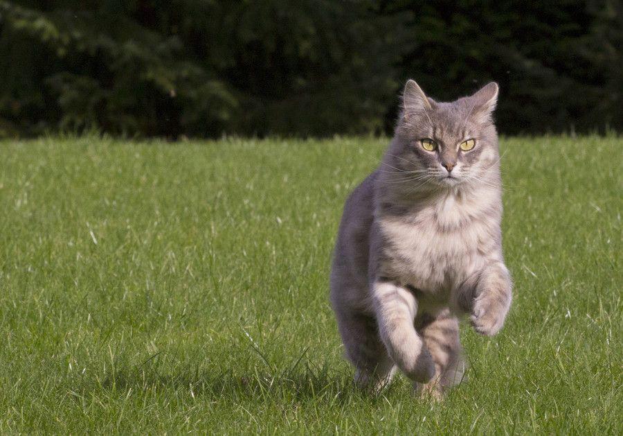 Run, poussy run. by Cat Ti on 500px
