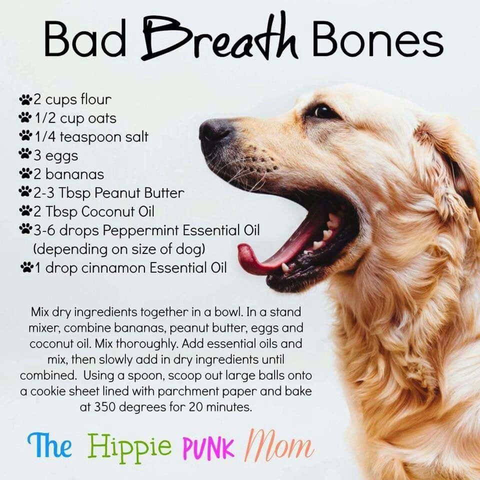 DOG TRAINING TIPS 43 Bad dog breath, Dog breath, Dog