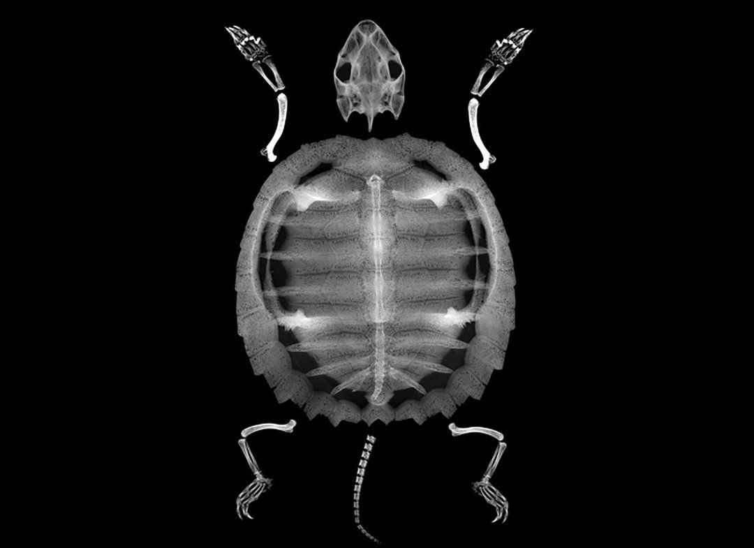 Incredible X-Ray Images Of Seashells And Fossils Captured By Photographer Bert Myers (PHOTOS)