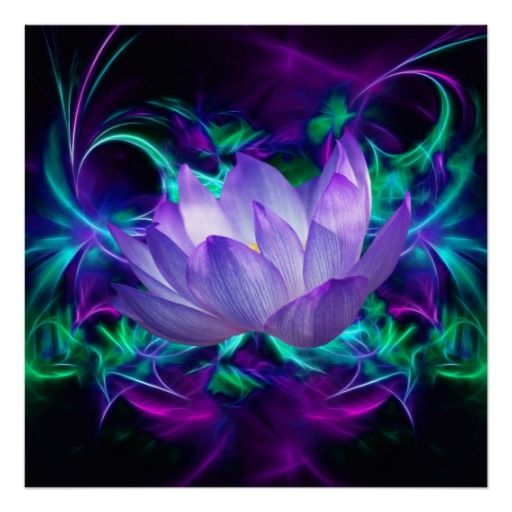 Purple Lotus Flower And Its Meaning Poster Zazzlecom Leemar