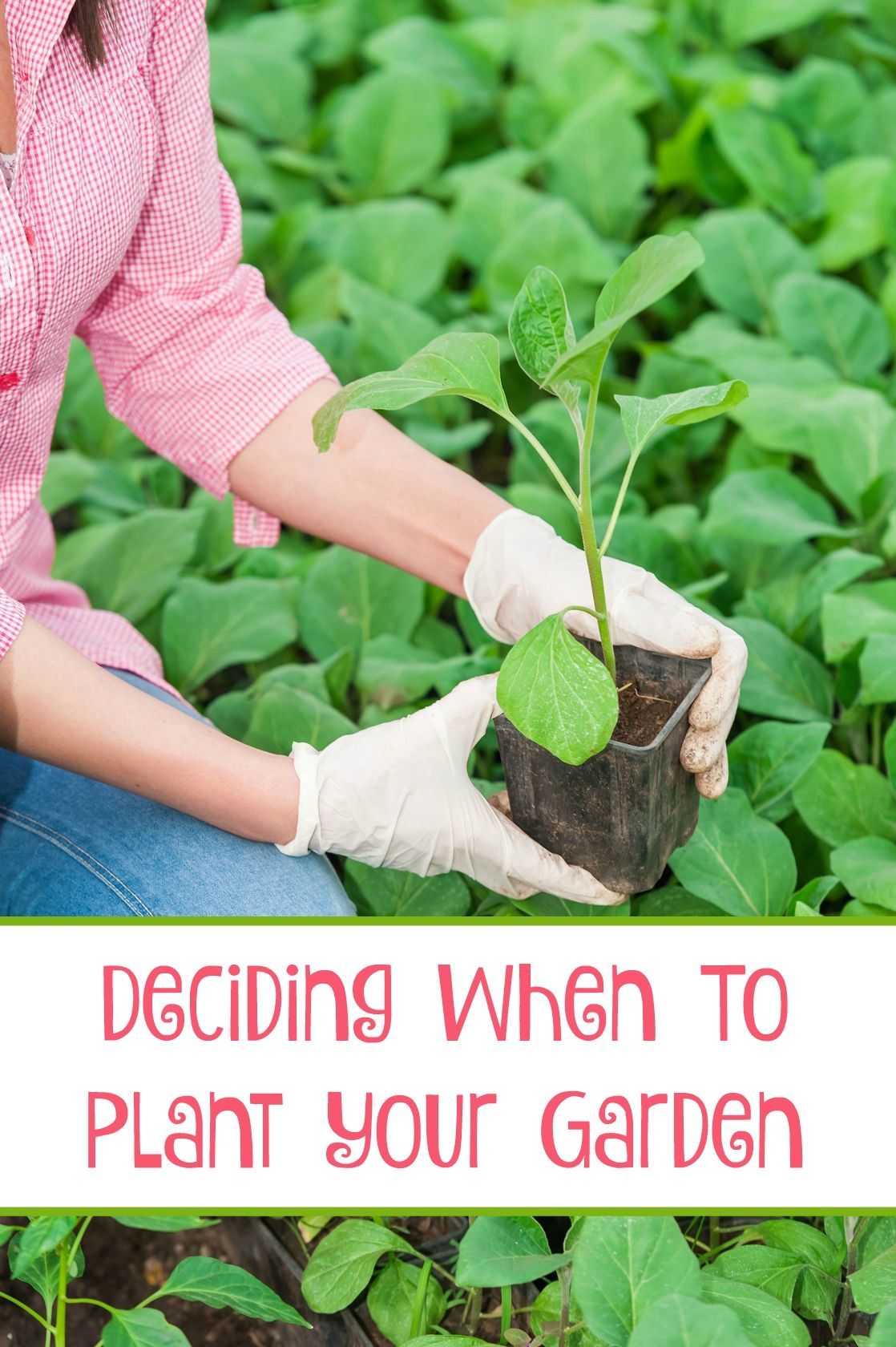 Deciding When to Plant Your Garden