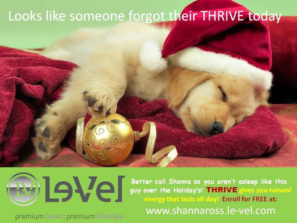Don't be dog tired this Holiday Season. Get your THRIVE on!