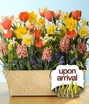 Glorious Spring Bulb Garden Remind Me To Buy Bulbs This Fall So I Can Do This Flower Bulb Gifts Spring Bulbs Garden Spring Bulbs