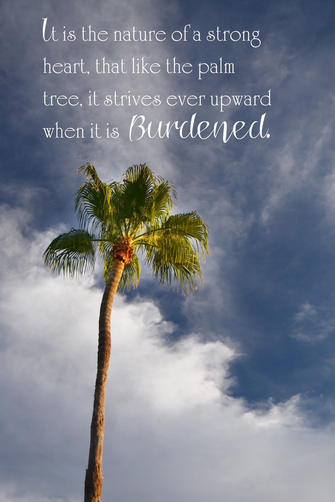 Palm Tree Quote The Palm Palm Tree Quotes Quotes Tree Quotes