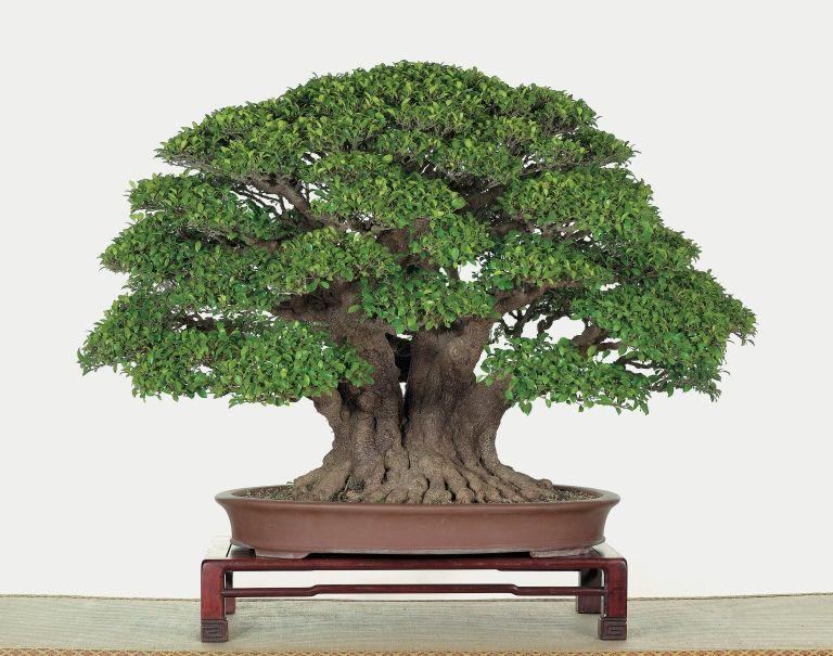 Photo From The Bonsai Clubs International Convention 2017 Taiwan We Ll Be There To Film These Magnificent Bonsai Trees Bons Arvores Bonsai Orquideas Bonsai