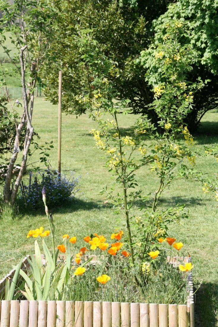 12 Vivaces sans arrosage | Fleurs sans arrosage, Arrosage et ...