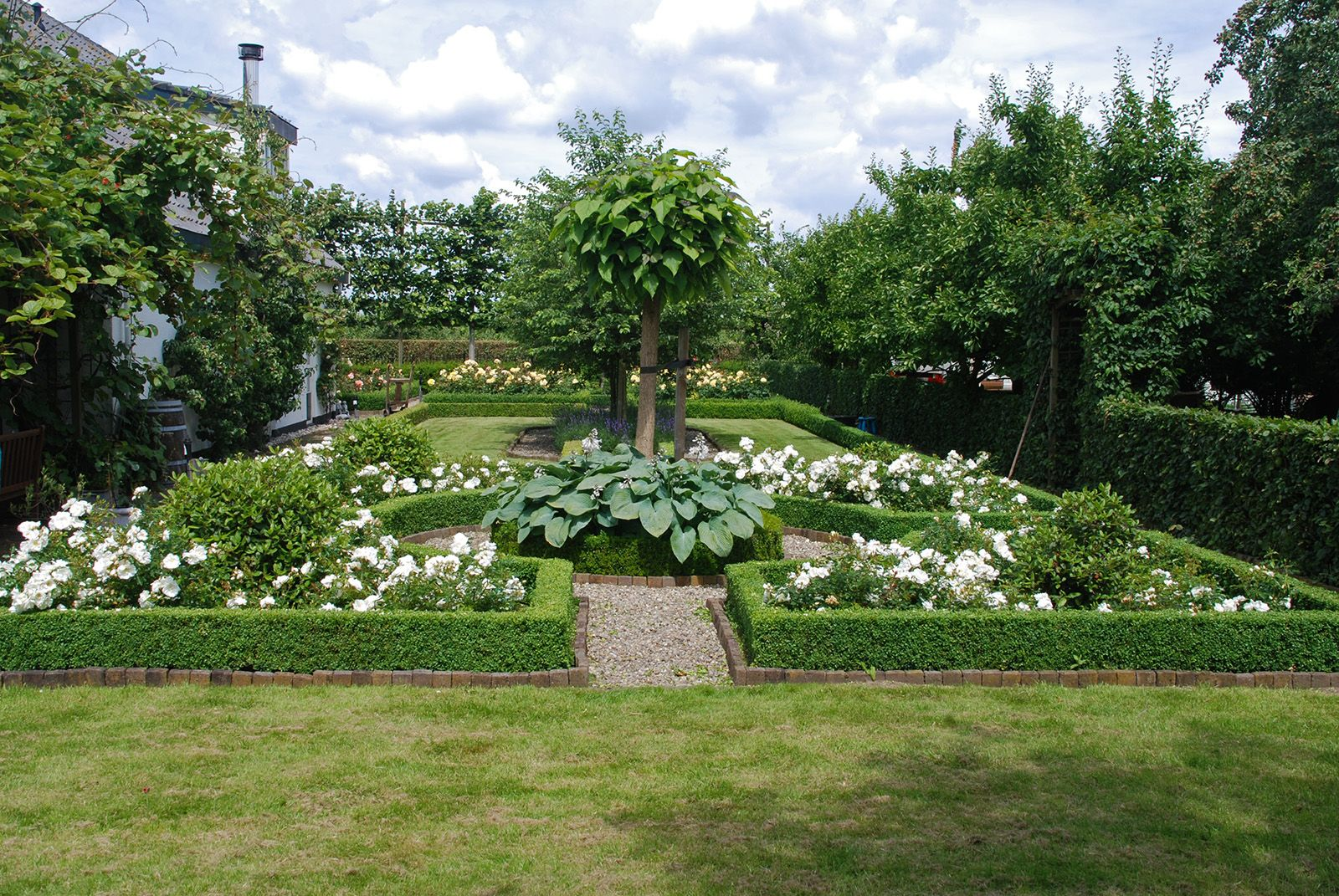 Buxusvakken beplanten google zoeken tuin pinterest for Tuin beplanten