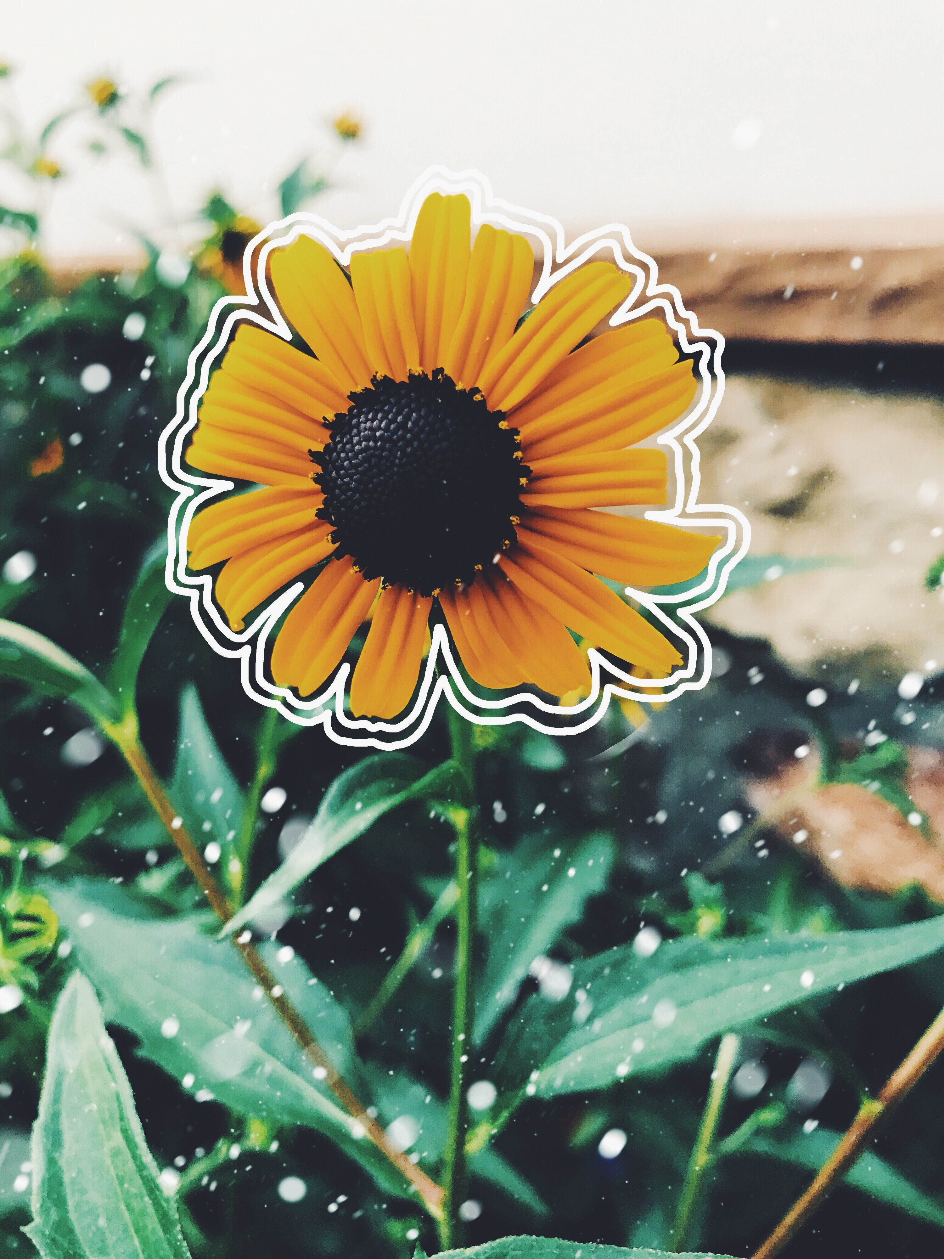 Vsco Sunflower Drawings Sunflower Wallpaper