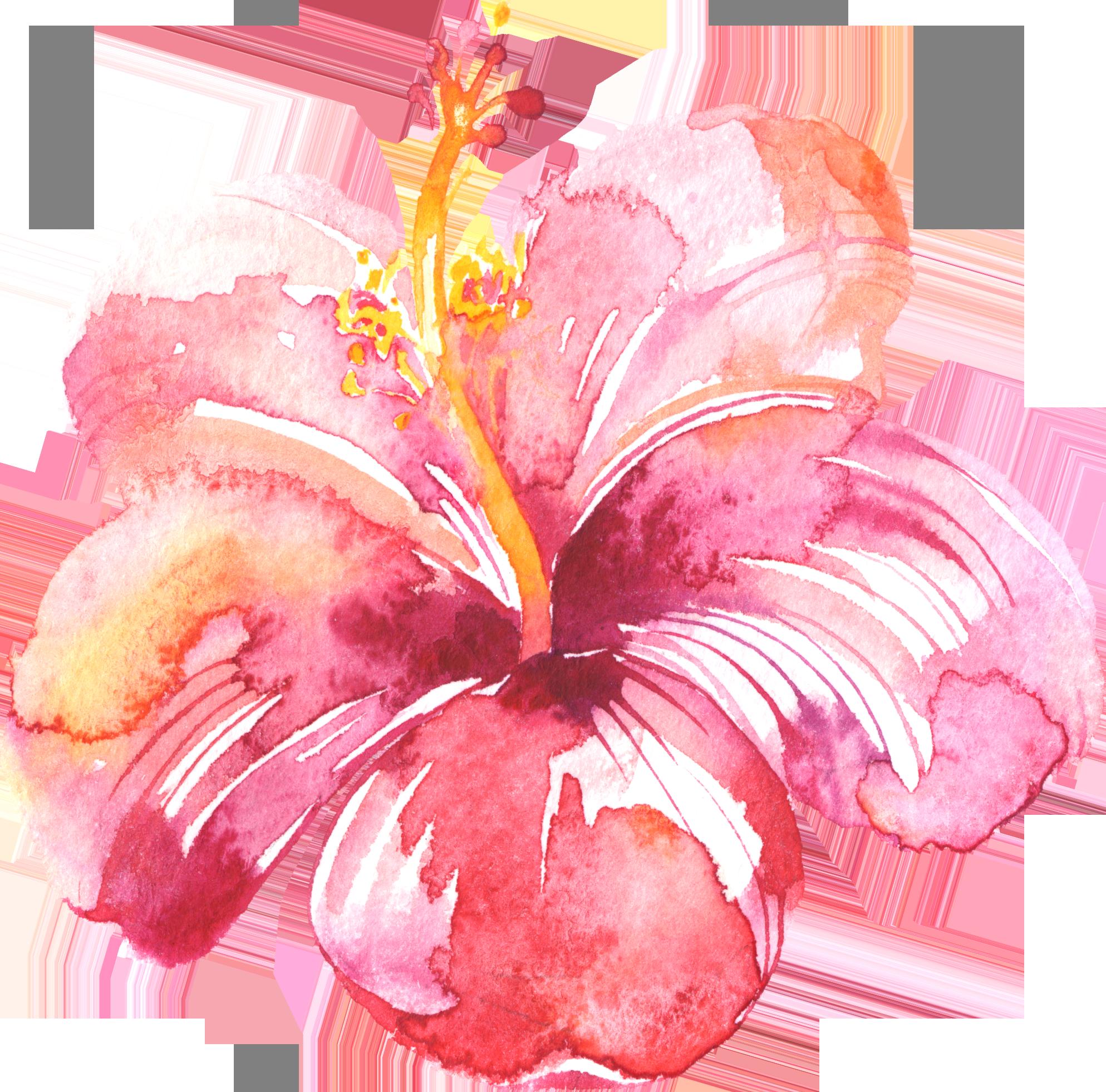 Watercolour Flower Painting Watercolor Flowers Floral Watercolor