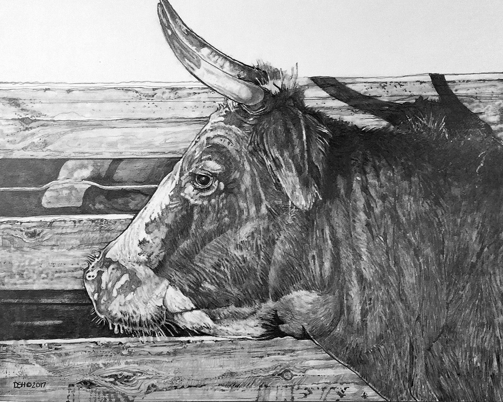 Cattle Drawing David Haley C Copyright 2018 D S Haley Artwork
