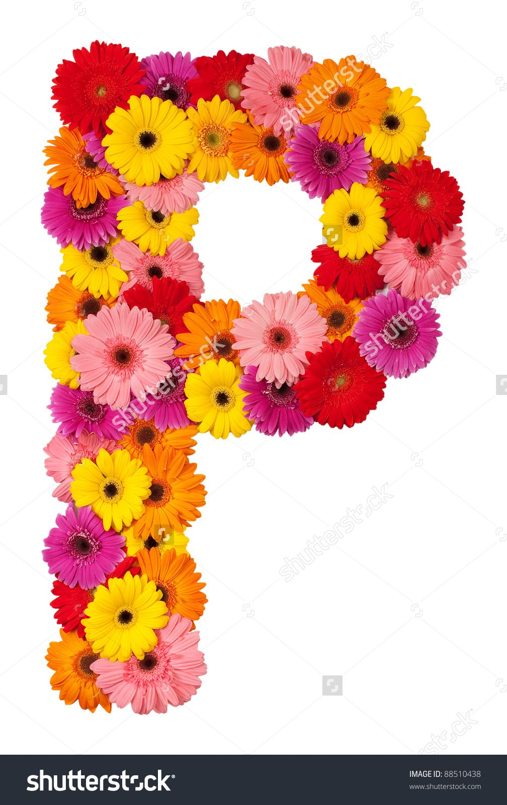 stock-photo-letter-p-flower-alphabet-isolated-on-white ...