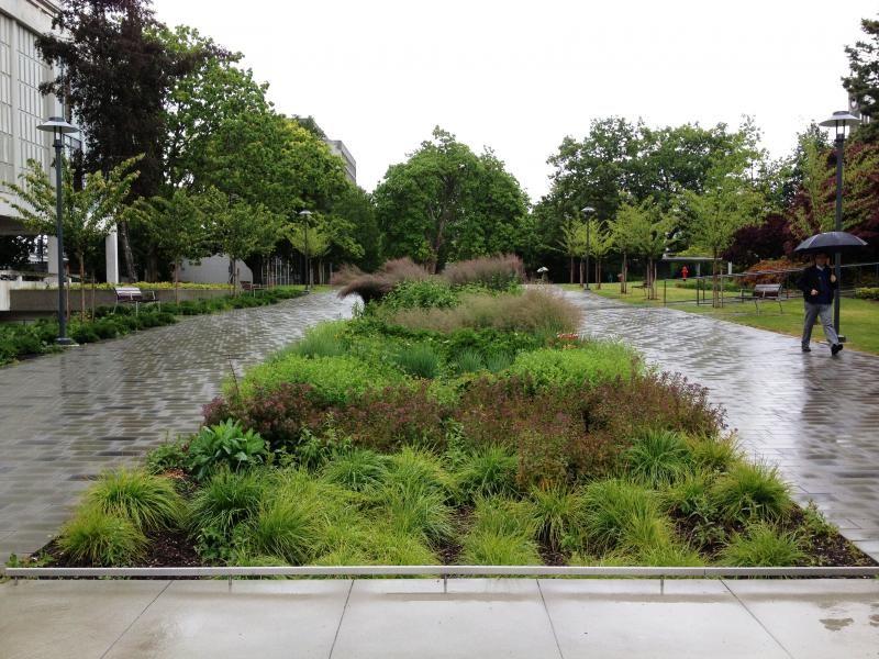 Turning Rainfall Into A Resource Rain Garden Urban Garden Garden Types