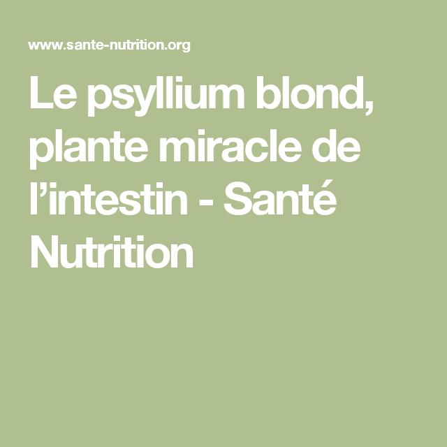 le psyllium blond plante miracle de l intestin ma. Black Bedroom Furniture Sets. Home Design Ideas