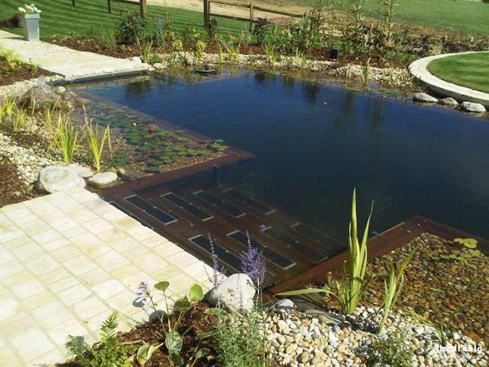best backyard swimming pools Natural pool, Swimming pond
